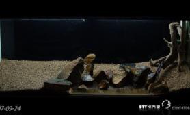 水草缸造景沉木水草泥化妆砂青龙石120CM尺寸设计03