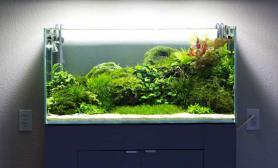 水草造景作品:水草造景(90cm)-126