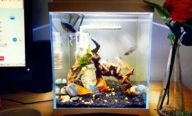 鱼缸造景小桌缸一口水草缸摆俩骨架玩玩