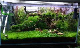 好景水草缸好缸水草缸好水水草缸好木头沉木杜鹃根青龙石水草泥