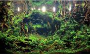 世界水草造景大赛120CM优秀赏作品《光的指引》CAA 2016IAPLC
