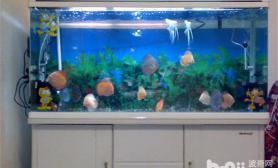 新手如何选择鱼缸