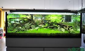 沉木水草造景