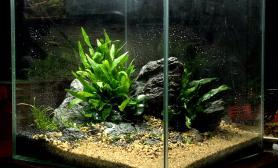 水草造景30方小缸