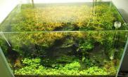 【原创】我的微观世界II沉木杜鹃根青龙石水草泥90x50x50 tank,created in September 29, 2013图片