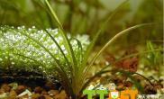 正确添加水草缸微量元素