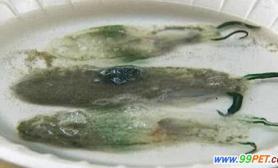 像水母又像鼻涕虫的海洋生物(多图)