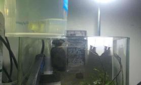 20*15的小虾缸