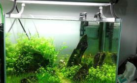 发几个小缸啦水草缸很久没发帖呢鱼缸水族箱