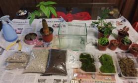 苔藓缸制作示范
