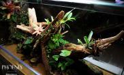 雨林沉木为主水陆生态缸