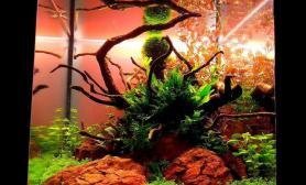 绝美的水草状态鱼缸水族箱