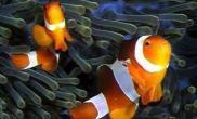 海水鱼的饲养心得(图)