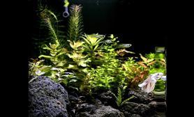 多图水草缸原创造景鉴赏《水世界》