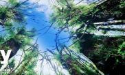 《天空》 IAPLC 2013 (107) ——预告片