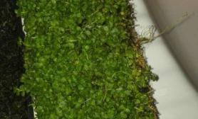 请草友帮忙看看这是什么草