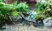 水草造景发个水陆缸
