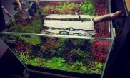 水草造景40小缸 2个多月了 红红个绿绿 还行