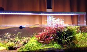 水草造景开缸一年了~发一贴纪念一下鱼缸水族箱