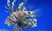 鱼缸水面油膜的处理方法