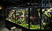 四川成都雨林生态缸案例造景工程