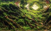 森韵120CM造景沉木、杜鹃根、黑火山石