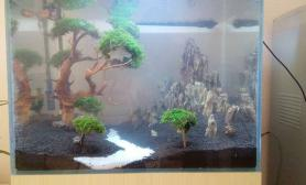 水草造景新开60缸水草缸树石搭配水草缸大师们给点意见鱼缸水族箱
