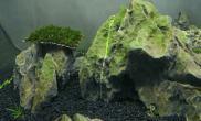石头青青的水草缸有什么解决方法