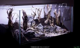 哇哦水草缸这个景成景了鱼缸水族箱鱼缸水族箱鱼缸水族箱漂亮鱼缸水族箱鱼缸水族箱鱼缸水族箱