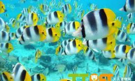 大型热带鱼混养时打架现象处理