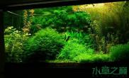 鱼缸造景水草造景的必备品
