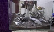 50青龙石景缸--骨架