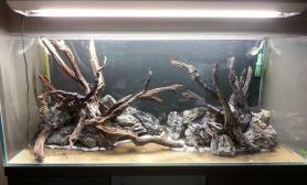水草造景作品:水草造景(120cm)-61