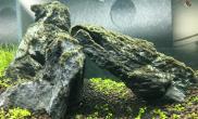 大神们水草缸怎么解决一下草缸石头上藻类?