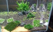 我发现只要缸里面的草进去状态水草缸冒泡是很容易的鱼缸水族箱