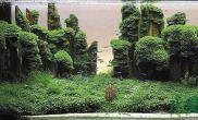 水族箱造景石林春色