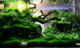 水草缸造景沉木水草泥化妆砂青龙石90CM尺寸设计78