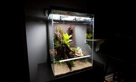 雨林生态缸制作过程图解