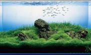 影响水草缸水质的因素有哪些