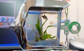 饲养金鱼的USBmini鱼缸(多图)