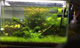 水草造景昨天重新造景了一下水草缸不知道有什么可以改进的吗