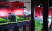 日本锦的水晶虾工作室