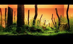 石家庄绿洲水景ADA2011参赛作品《远古暮光》