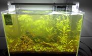 2号开的缸水草缸各种折腾水草缸水还是黄沉木杜鹃根青龙石水草泥