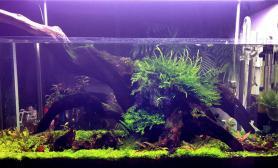 实在无聊沉木杜鹃根青龙石水草泥拍了我家几个破缸子鱼缸水族箱