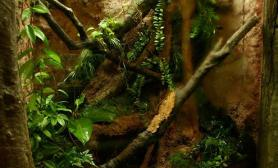 雨林水陆生态缸09