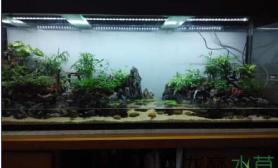 水草造景中国山水画式的水陆造景