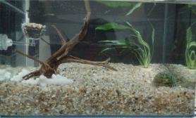 新手建缸水草缸求吐槽鱼缸水族箱求问种什么草鱼缸水族箱