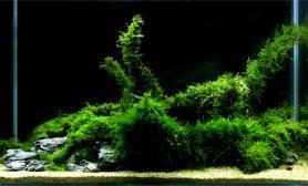 沉木青龙石水草造景90CM尺寸设计16