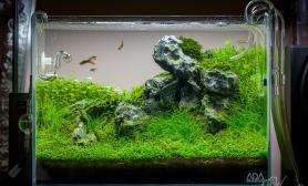 水草缸造景沉木水草泥化妆砂青龙石45CM及以下尺寸设计36